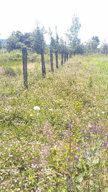 Development of riparian strips along Brandy Creek