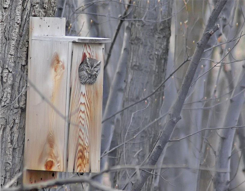 Nest box installed along Brandy Creek